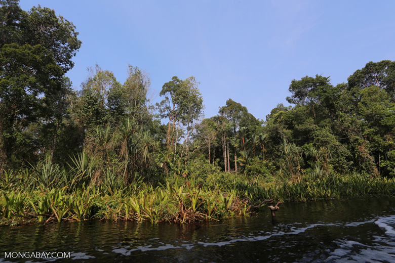 Peat swamp in Indonesia