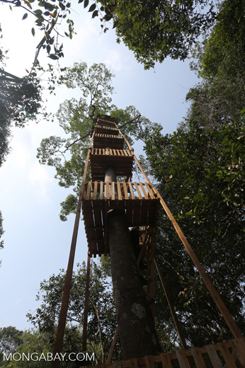 Canopy observation tower [riau_0458]