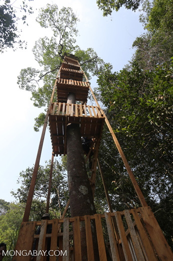 Canopy observation tower [riau_0459]