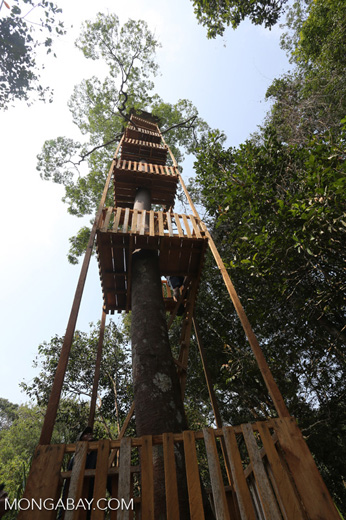Canopy observation tower [riau_0460]