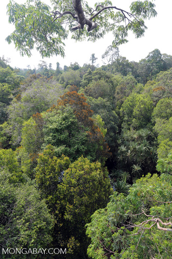 Rainforest canopy in Sumatra