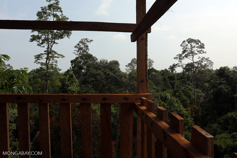 Canopy observation tower [riau_0475]