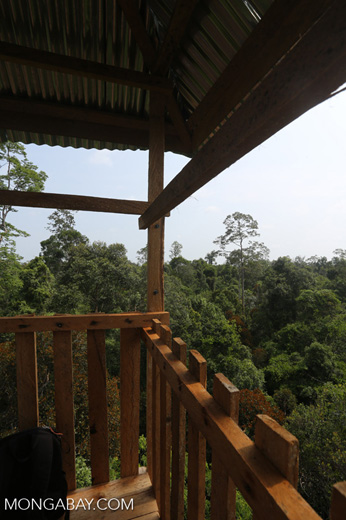 Canopy observation tower [riau_0476]