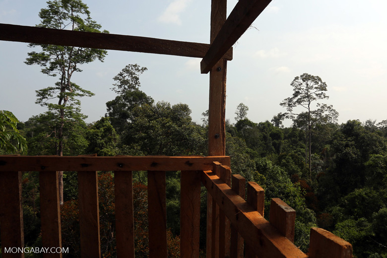 Canopy observation tower [riau_0477]