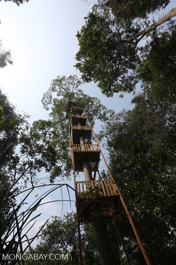 Canopy observation tower