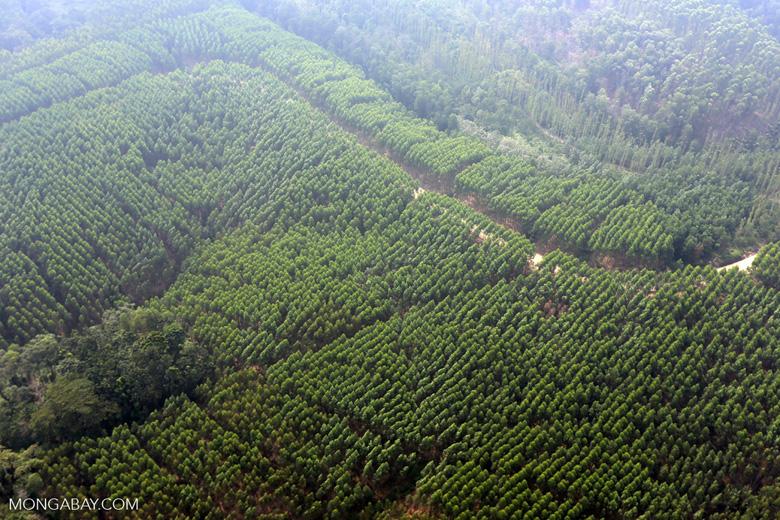 Woodpulp plantation [riau_0574]