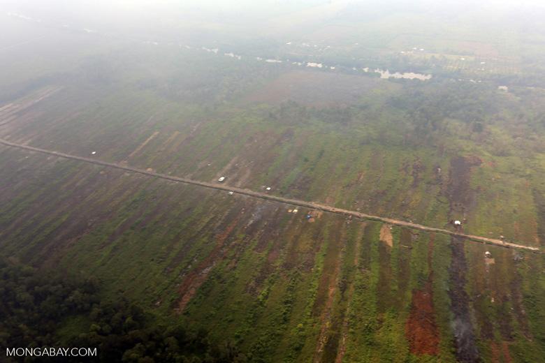 Deforested peatland [riau_0598]