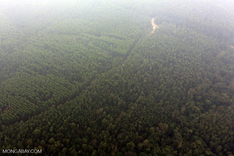 Deforested peatland [riau_0600]