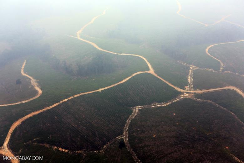 Deforested peatland [riau_0602]
