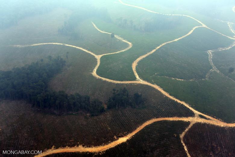 Deforested peatland [riau_0603]