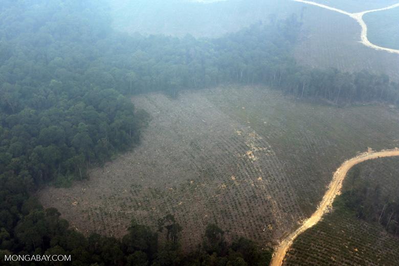 Deforested peatland [riau_0609]