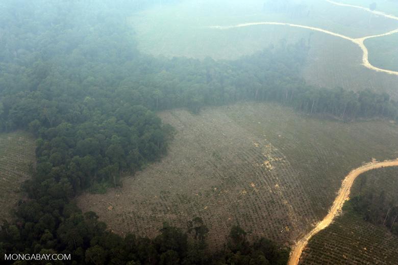 Deforested peatland [riau_0610]