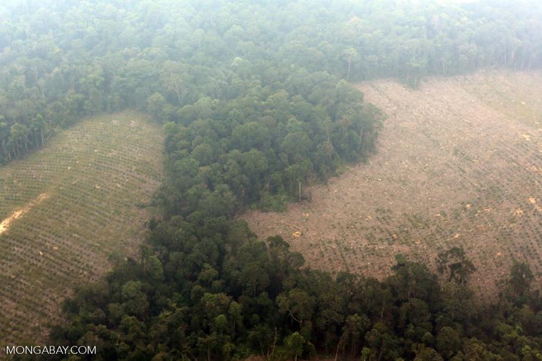 Deforested peatland [riau_0612]