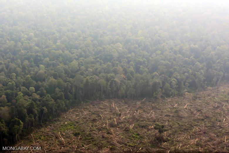 Deforestation in Riau [riau_0618]