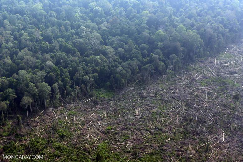 Deforestation in Riau [riau_0623]