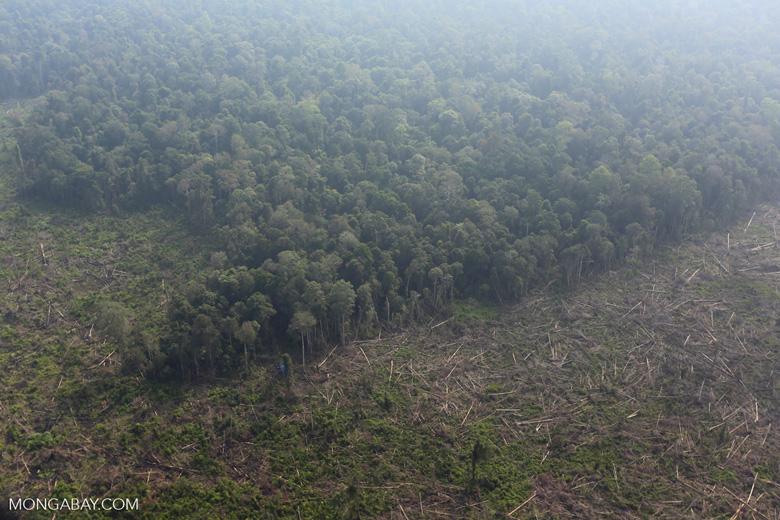 Deforestation in Riau [riau_0625]