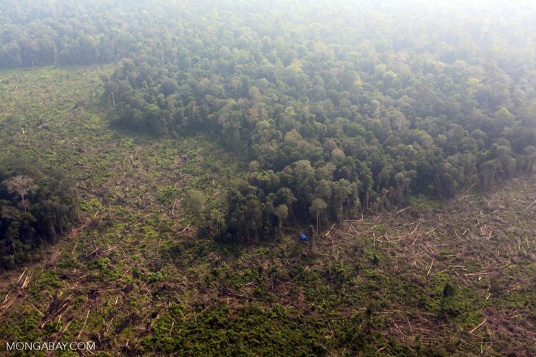 Deforestation in Riau [riau_0628]