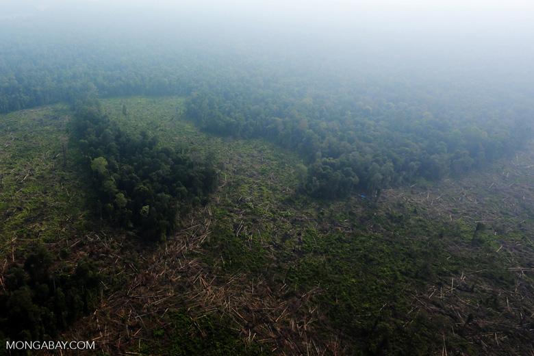 Deforestation in Riau [riau_0632]
