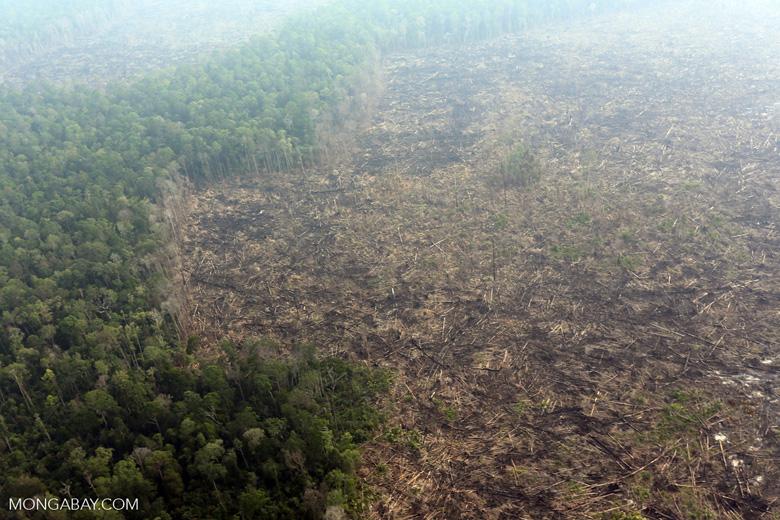 Deforestation in Riau [riau_0636]