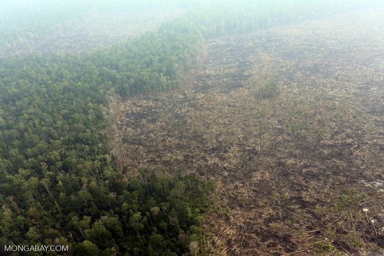 Deforestation in Riau