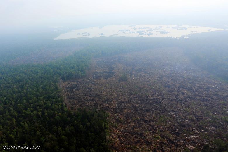 Deforestation in Riau [riau_0638]