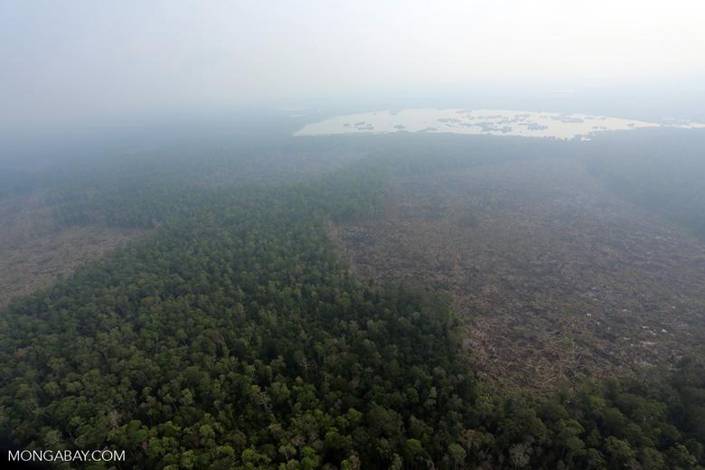 Deforestation in Riau [riau_0642]