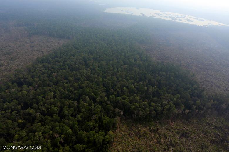 Deforestation in Riau [riau_0643]