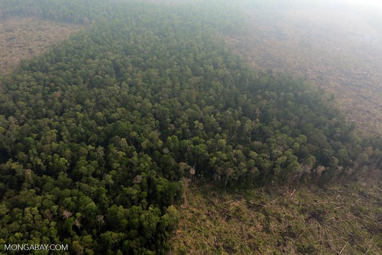 Deforestation in Riau [riau_0645]