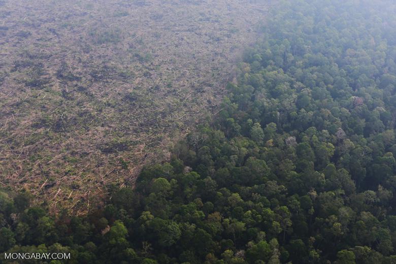 Deforestation in Riau [riau_0647]