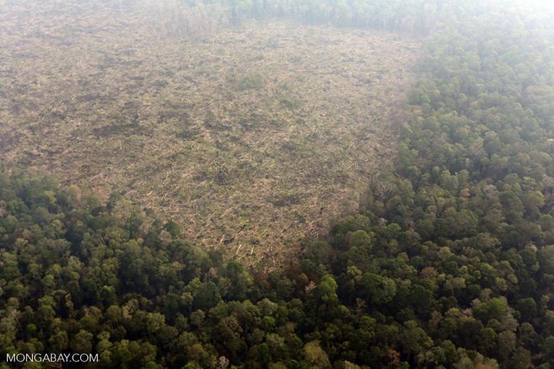 Deforestation in Riau [riau_0651]
