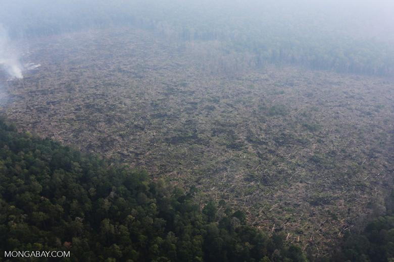 Peat fire in Riau [riau_0653]