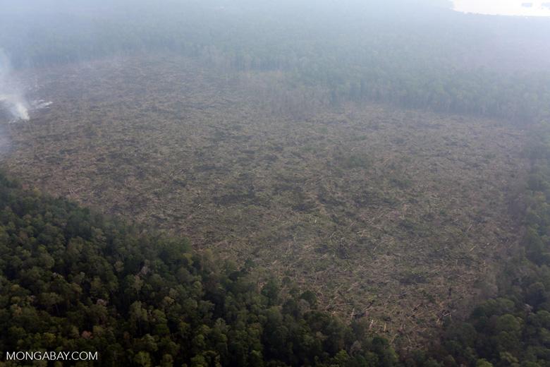 Peat fire in Riau [riau_0654]