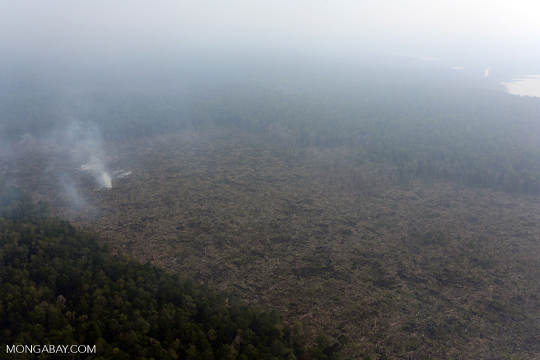 Peat fire in Riau [riau_0655]