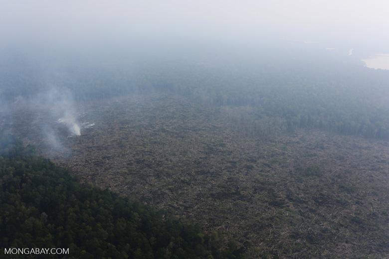Peat fire in Riau [riau_0656]