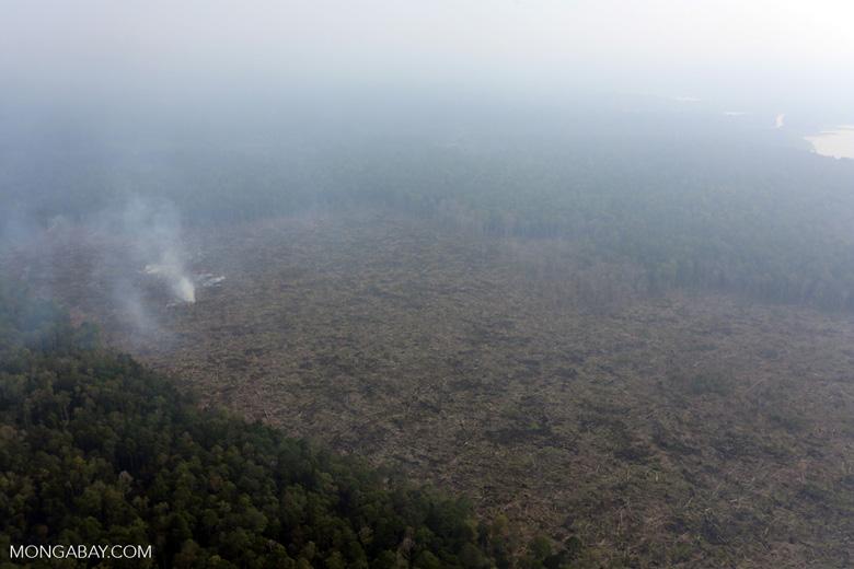 Peat fire in Riau [riau_0658]