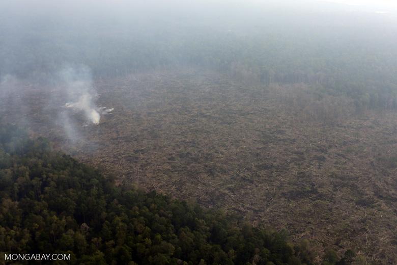 Peat fire in Riau [riau_0659]
