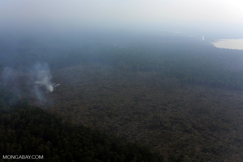 Peat fire in Riau [riau_0660]