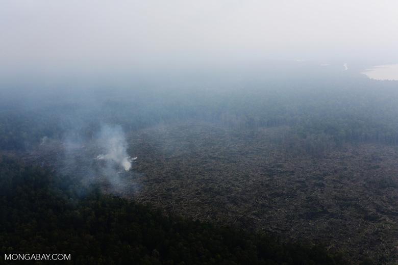Peat fire in Riau [riau_0663]