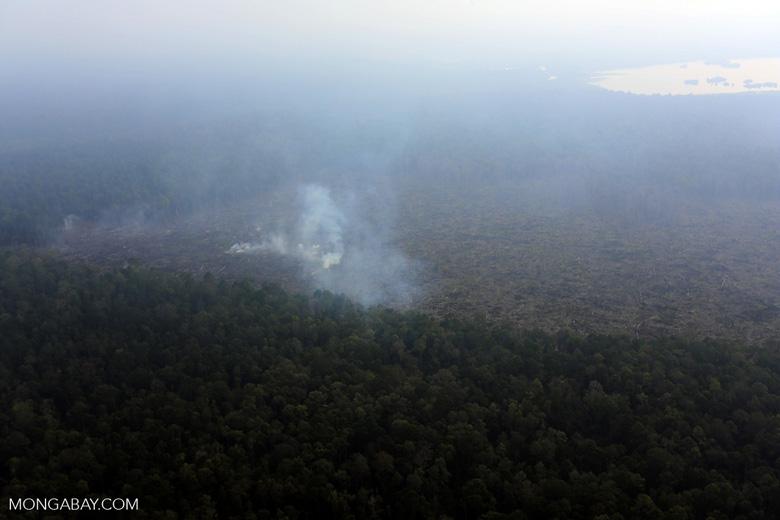 Peat fire in Riau [riau_0667]