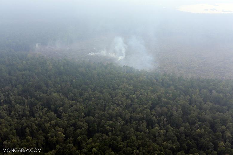 Peat fire in Riau [riau_0674]