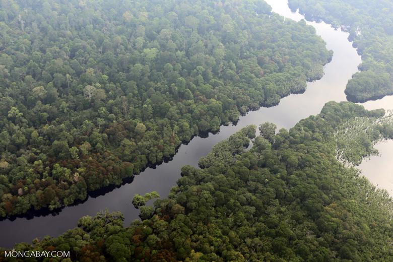 River in a Riau peat forest [riau_0681]