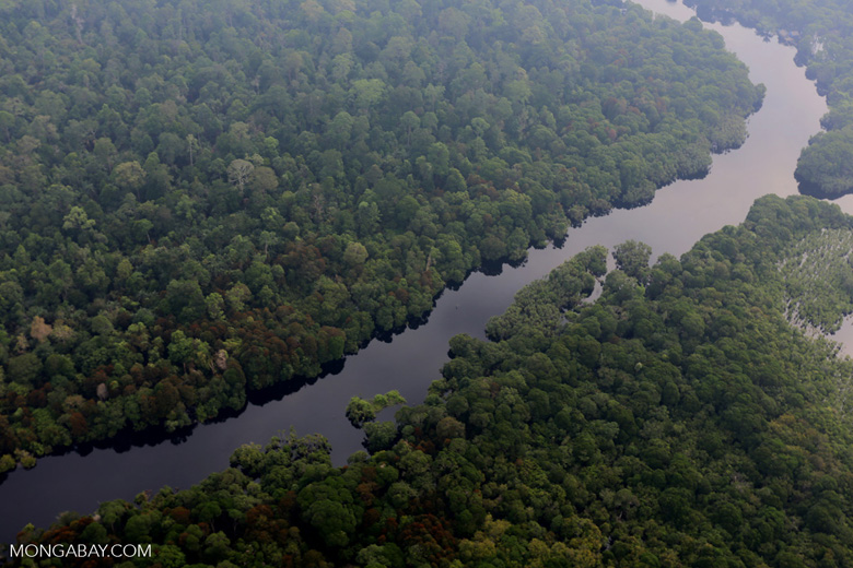 River in a Riau peat forest