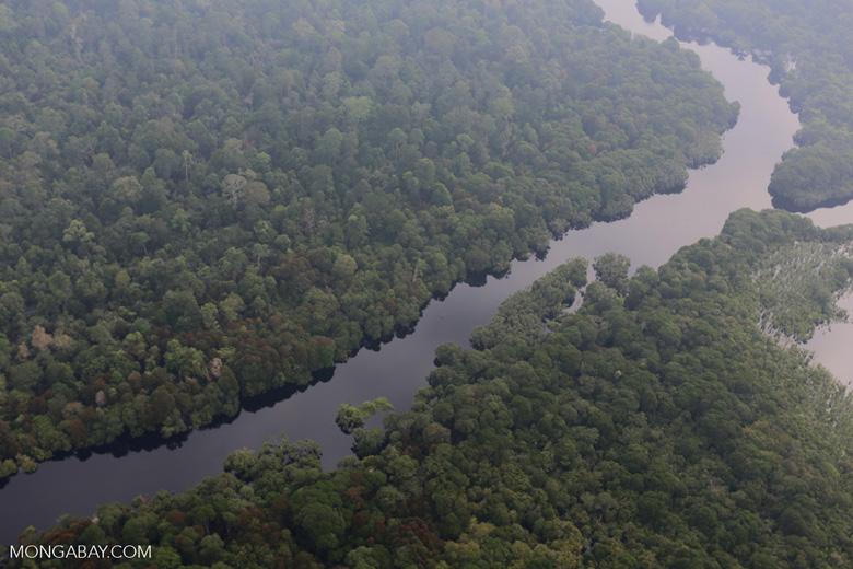 River in a Riau peat forest [riau_0683]