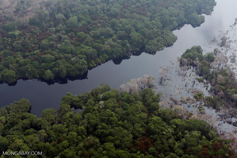 River in a Riau peat forest [riau_0700]