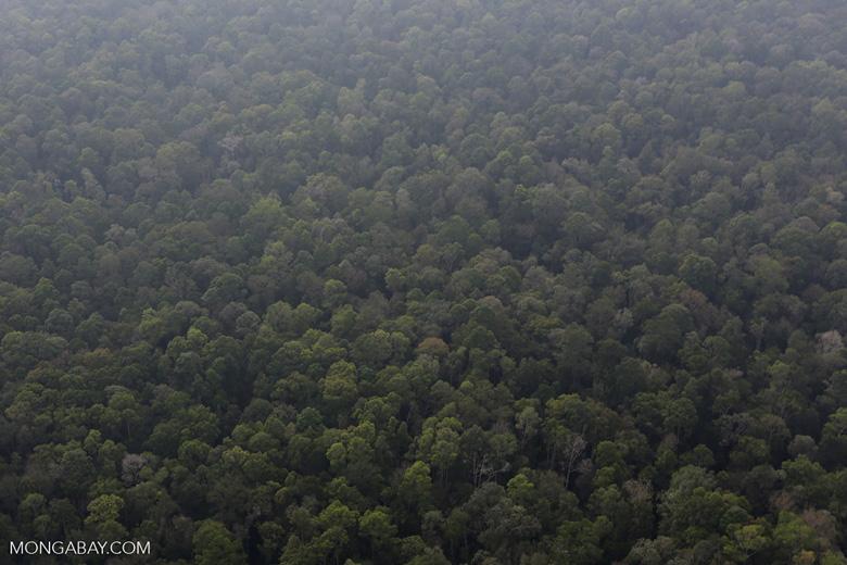 Peat forest in Giam Siak Kecil [riau_0725]