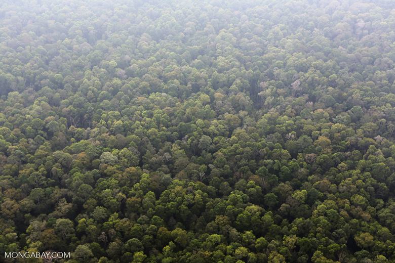Peat forest in Giam Siak Kecil [riau_0729]