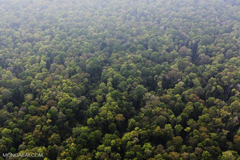 Peat forest in Giam Siak Kecil [riau_0737]