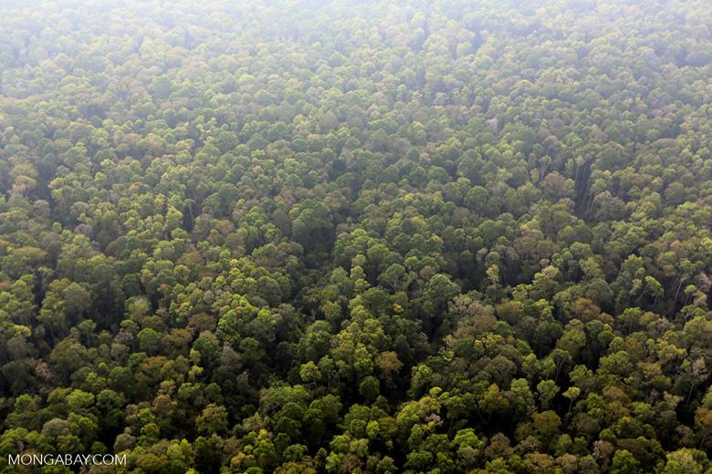 Peat forest in Giam Siak Kecil [riau_0738]