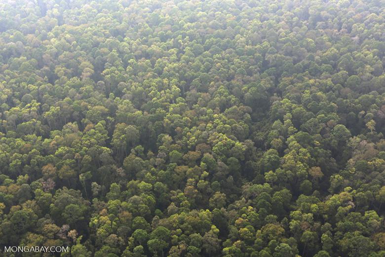 Peat forest in Giam Siak Kecil [riau_0739]