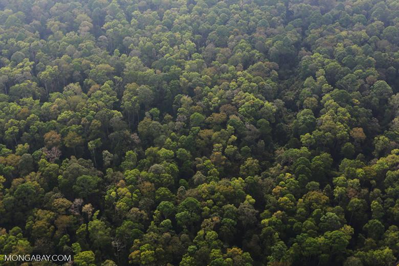 Peat forest in Giam Siak Kecil [riau_0742]